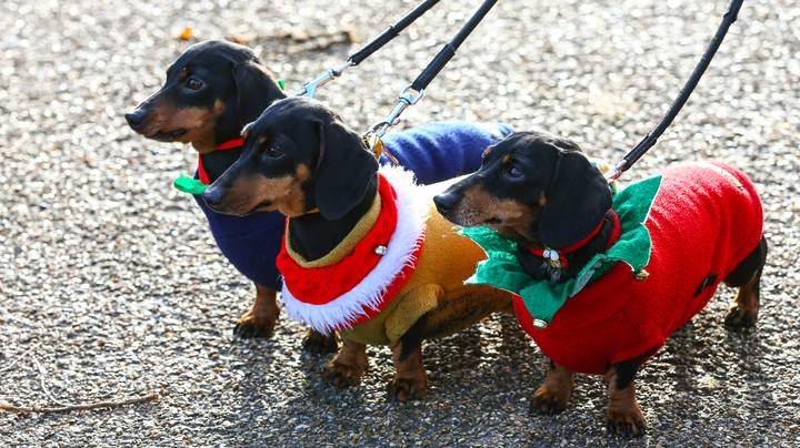 Hundreds Of Festive Sausage Dogs Had An Outing In Hyde Park