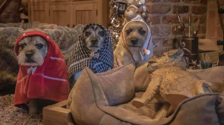 Dogs Pose For Incredible Nativity Scene To Lighten The Mood This Christmas