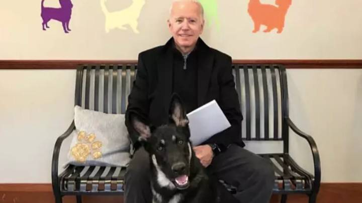 Joe Biden's German Shepherd To Be First Rescue Dog To Live In The White House