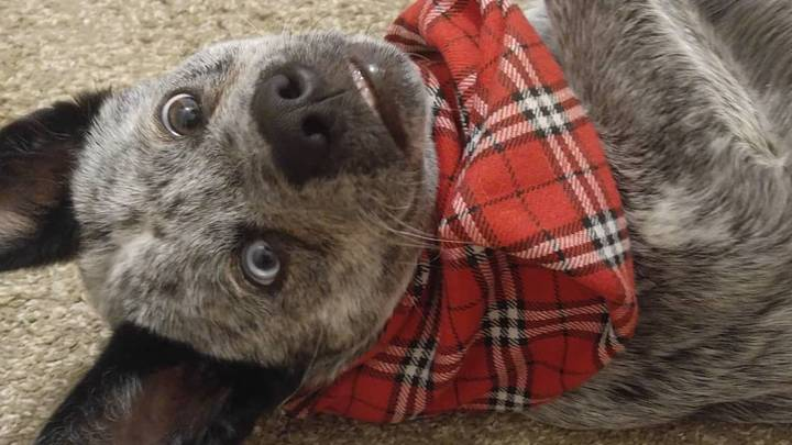 'Miracle' Dog Who Is Missing Part Of His Brain Dubbed The 'Happiest Pooch In The World'