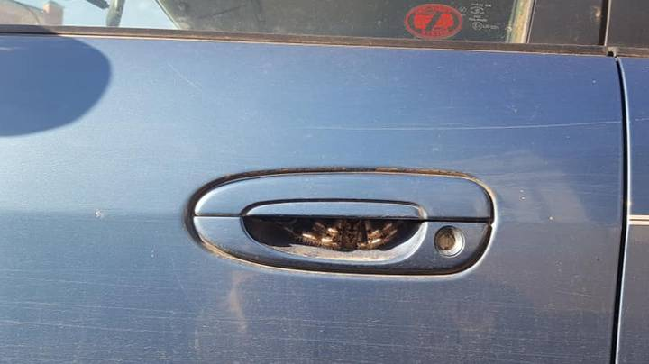 Woman Refuses To Drive For A Week After Finding Huge Spider Hiding In Her Door Handle