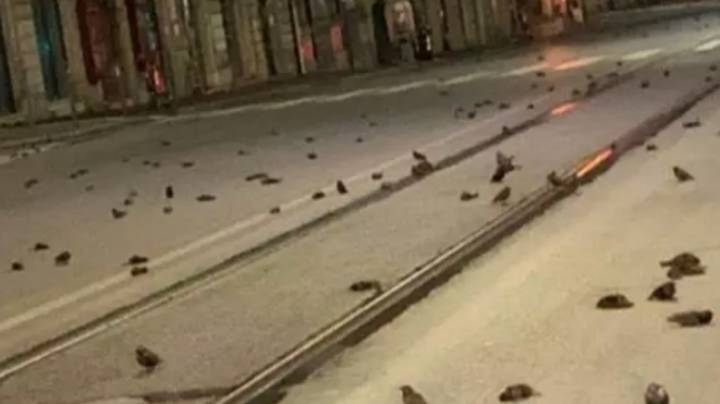 Hundreds Of Birds Lie Dead In Street After New Year Fireworks In Rome