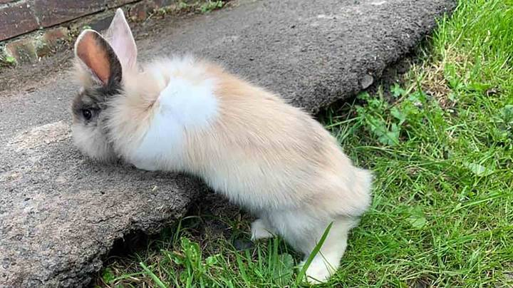 Woman's Pet Rabbit Is Killed By 'Bomb-Like' Fireworks