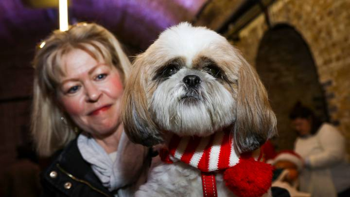 An Entire Christmas Market Devoted To Dogs Is Coming To The UK
