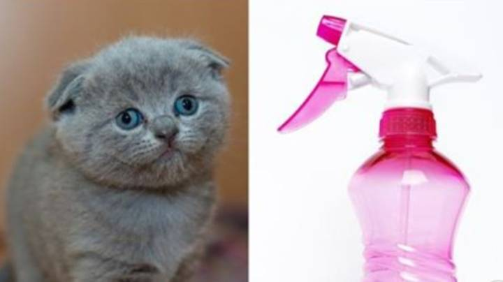 Experts Warn Air Fresheners 'Make Cats Nervous And Lose Weight'