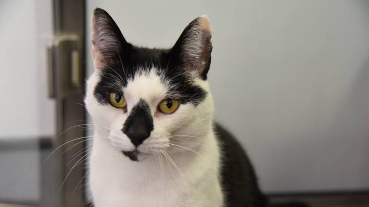 Britain's Loneliest Cat Wants A New Home For His Birthday