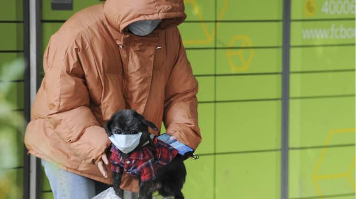 A Dog Has Tested Positive For Coronavirus