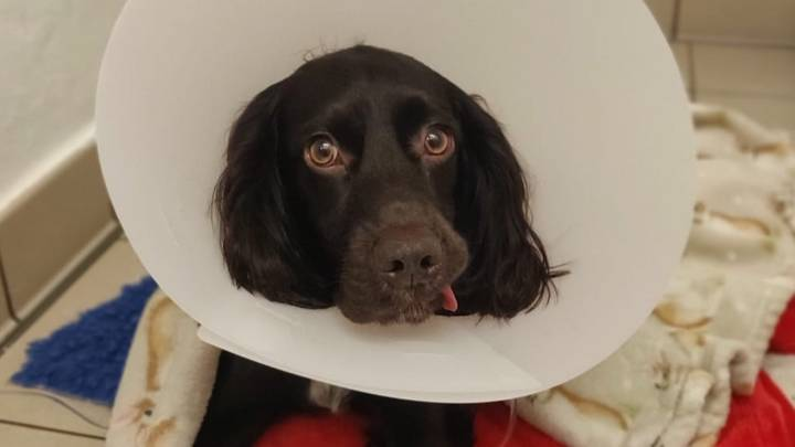 Owner Issues Warning After Pet Dog Nearly Died After Eating Face Mask