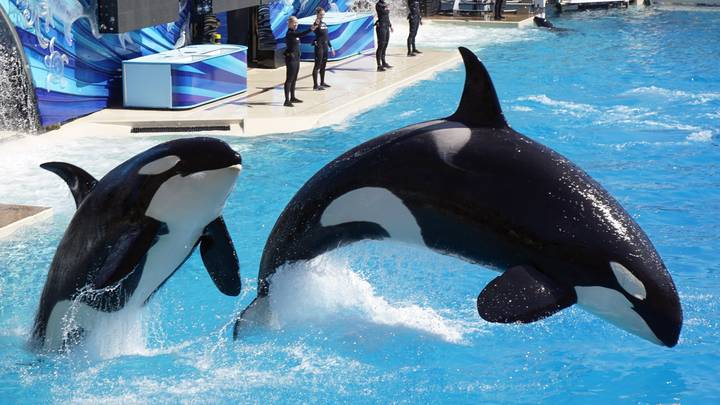 TripAdvisor Ends Ticket Sale To All Attractions That Import And Breed Dolphins And Whales