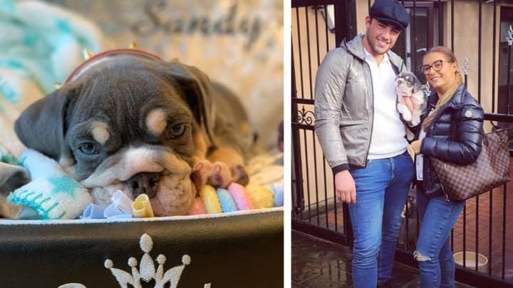 Jack Fincham Breaks Twitter Silence After Backlash Over New Dog