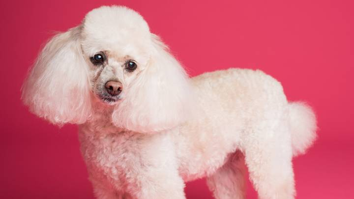 Sheridan Smith Wants Puppies In Need Of Haircuts For Her New BBC Show 'Pooch Perfect'