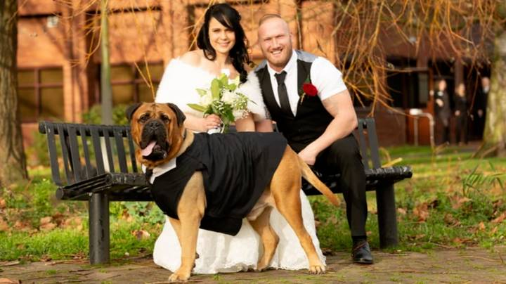 Couple Move Wedding Forward So Dog Can Attend After Cancer Diagnosis