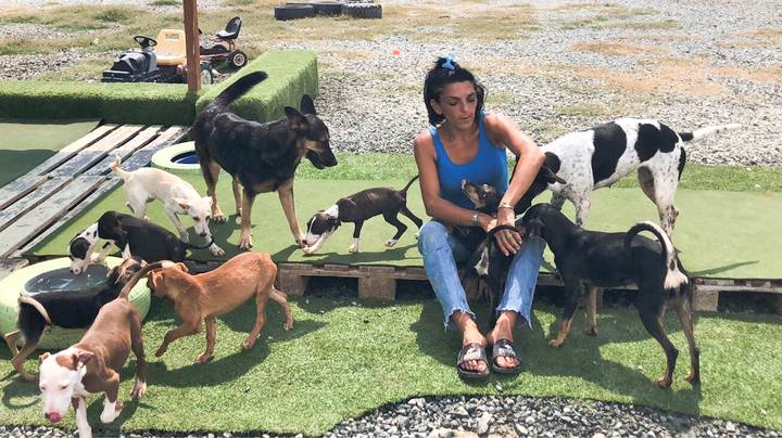 Woman Quits Her Job And Spends Life Savings Looking After Stray Dogs