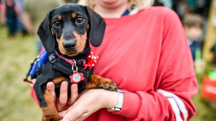 Animal Abusers Could Face Five Years In Prison Under Proposed New Law