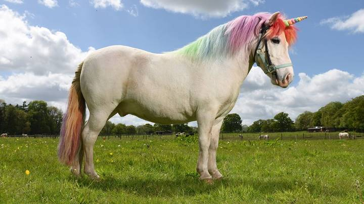 The First Ever Nationwide Unicorn Tour Is Coming To The UK