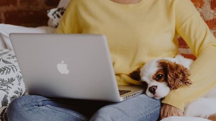 Why Working From Home With Your Pet Actually Makes You More Productive