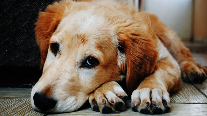Abusing Pets Is Now Illegal Under Domestic Abuse Act In Scotland