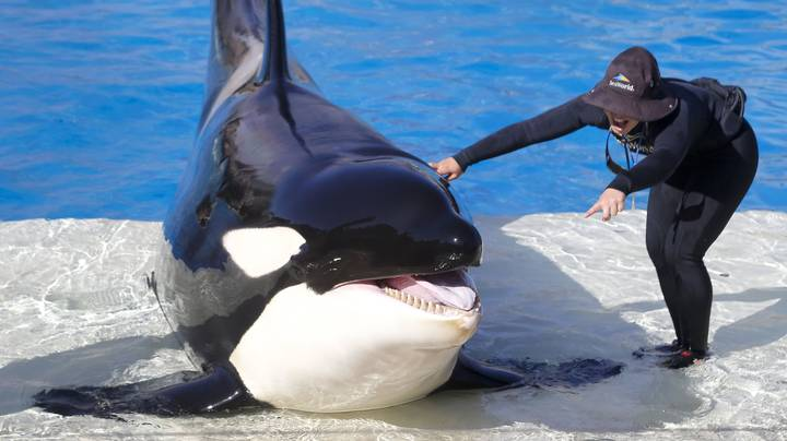 Virgin Holidays Axes SeaWorld From Its Packages And It's About Time