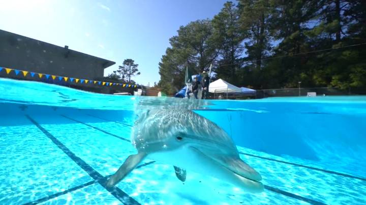 Scientists Hope To Use Robot Dolphins To Replace Captive Animals In Movies And Theme Parks