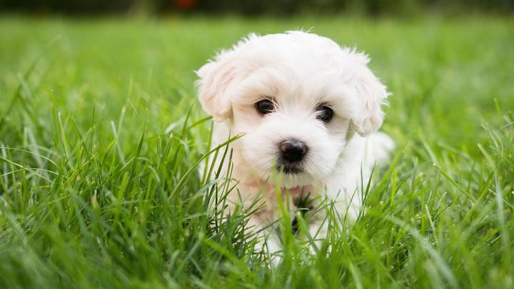 Vet Issues Warning About Deadly Effect Of Grass Seeds On Dogs