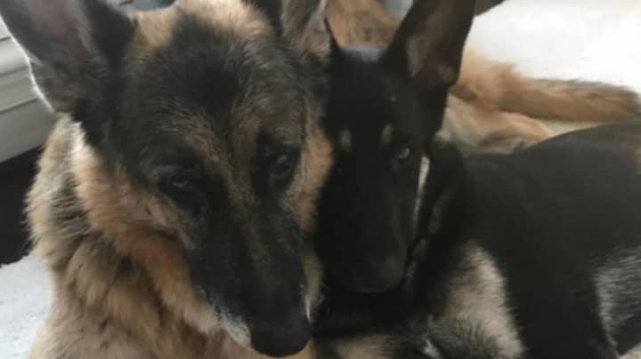 Joe Biden's Pet Dogs Get Their Own Twitter Account