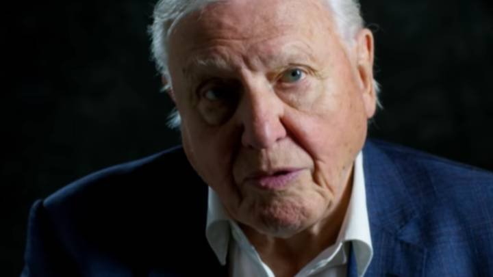 New David Attenborough Doc 'A Life On Our Planet' Is Coming To Netflix Next Month