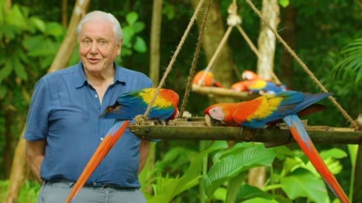 Life in Color with David Attenborough Drops On Netflix Today