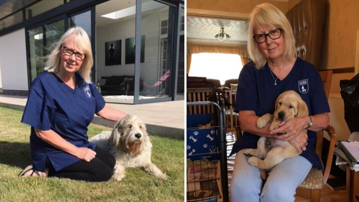 This Woman Is A Puppy Midwife And It Sounds Like The Best Job Ever