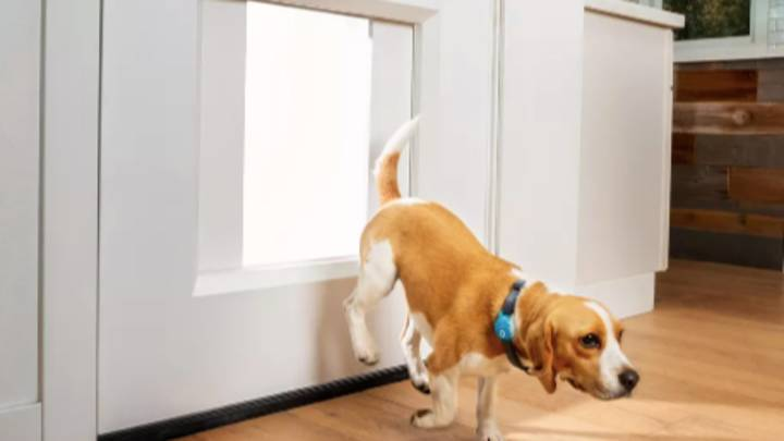 You Can Now Get A Doggie Door That Connects Yo Your Phone To Let Your Dog Out