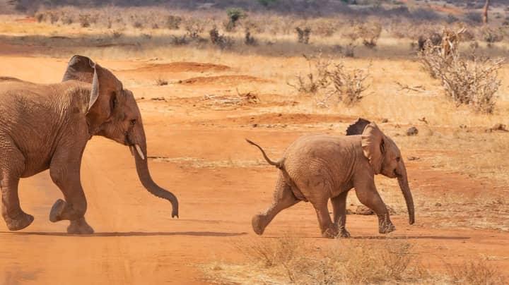 Kenya's Elephant Population Has Doubled Over Last Three Decades