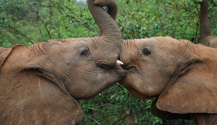 David Attenborough Fans Will Love Sky's New Series 'Wild Animals Babies'