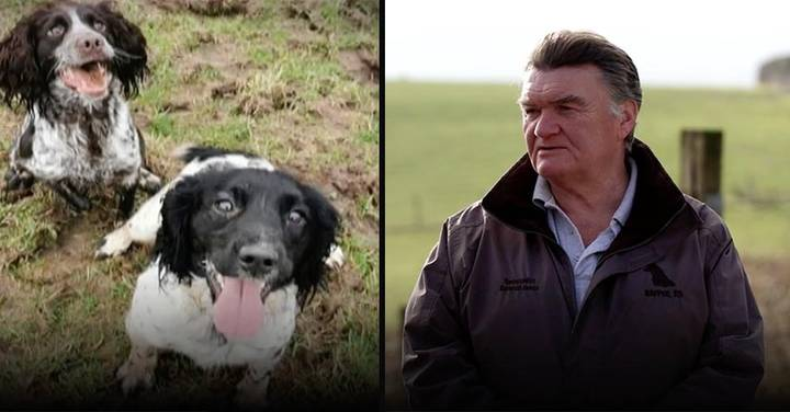 Man Finds 70 Stolen Dogs After Tracking Down Thieves Who Took His Spaniels