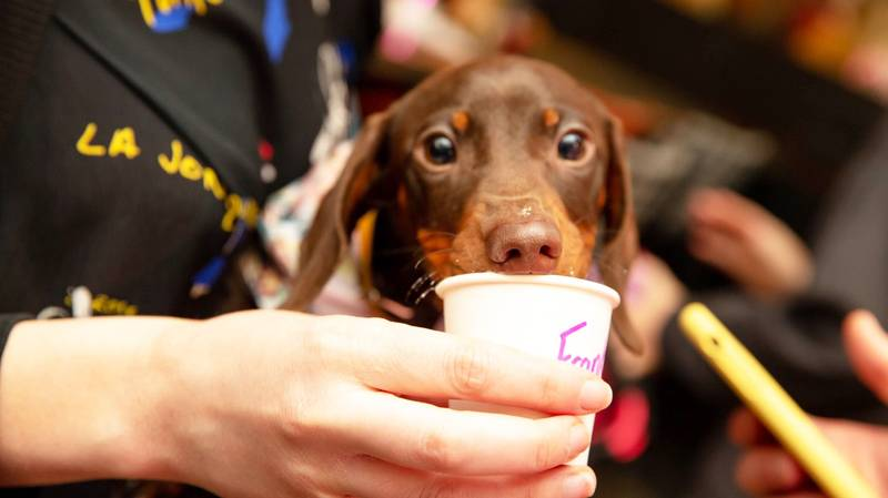 An Open-Air Dog Café Is Coming To The UK