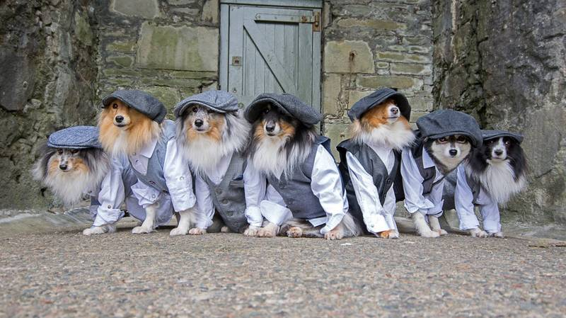 Adorable Collies Pose For 'Peaky Blinders' Themed Photo Shoot