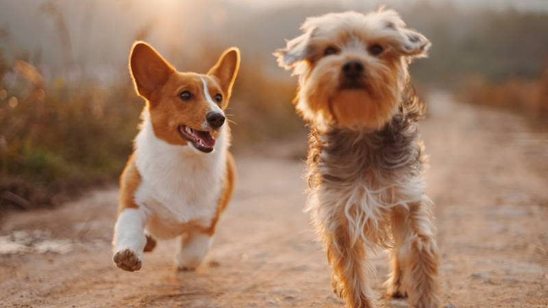 Study Reveals Having A Pet Dog Improves Your Confidence