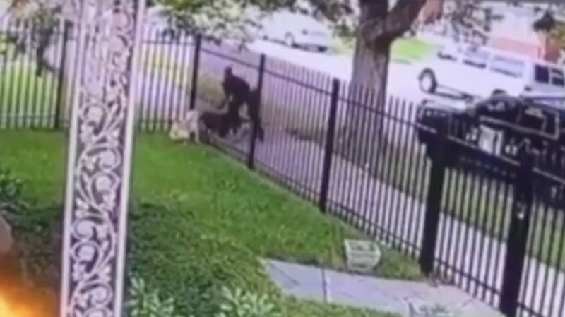 Shocking Footage Shows Detroit Police Officer Shoot And Kill Dog In Its Own Garden