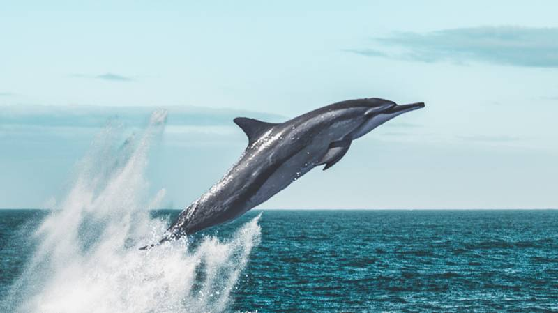 The UK Just Launched Its First Whale And Dolphin Spotting Trail in Scotland