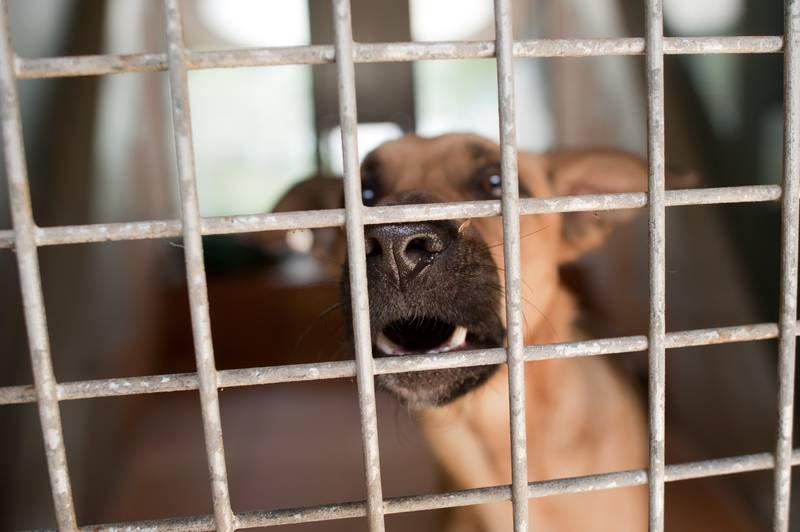 San Antonio Pet Stores To Sell Only Rescue Animals