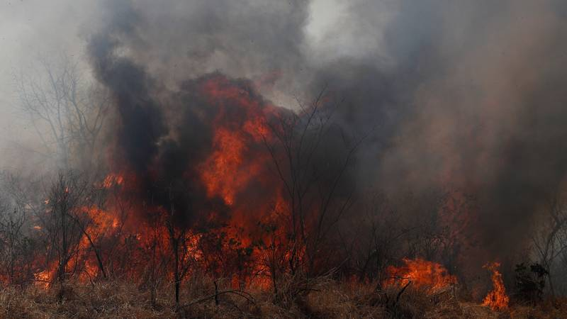 265 Endangered Species Are Being Threatened By The Amazon Forest Fires