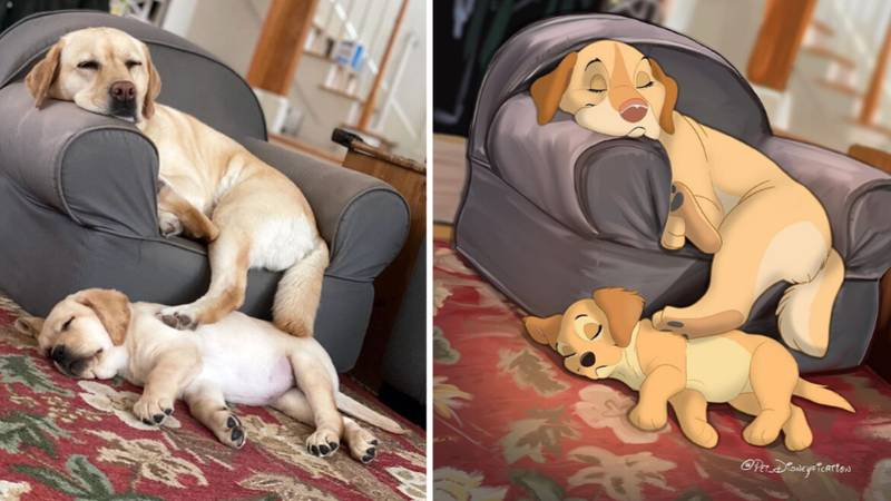This Artist Will Transform Your Pet Into A Disney Character