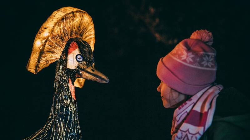Chester Zoo Lantern Festival Is Back For Christmas 2019