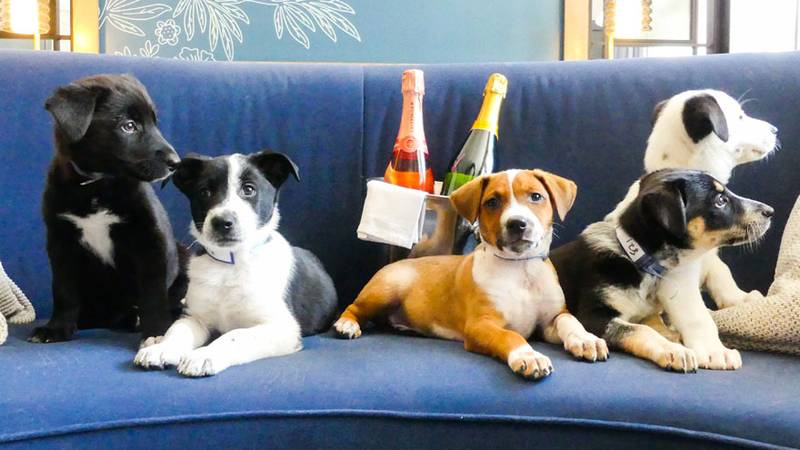 This Hotel Delivers Prosecco And Puppies To Your Door