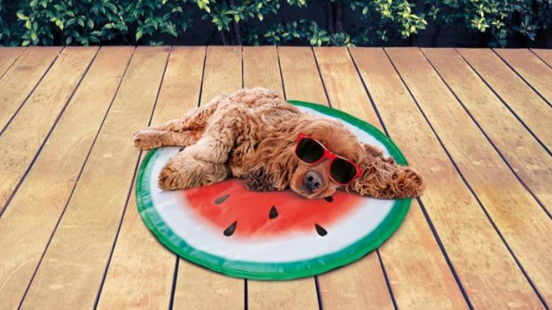 B&M Is Selling £4.99 Watermelon Dog Cooling Mats So You Can Sunbathe Together This Summer