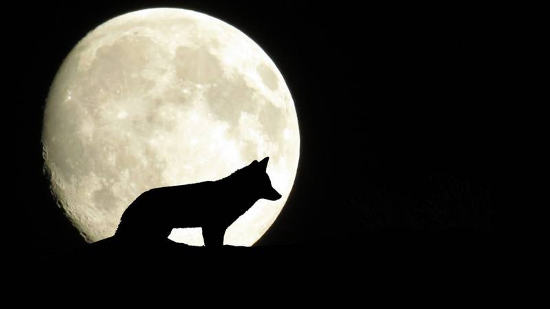 A Full Wolf Moon Is Coming This Week – Here's What It Means For You