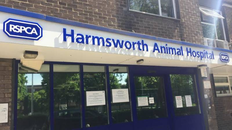 Fireworks Launched At RSPCA Animal Hospital In Sickening Video