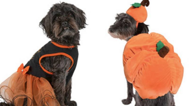 Pets At Home Is Selling Halloween Costumes For Your Dog From £1.50