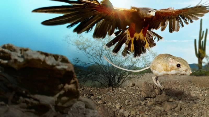 David Attenborough Fans Will Love Netflix's New Nature Doc 'Tiny Creatures'