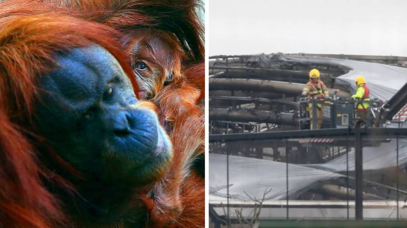 Chester Zoo Confirms A Number Of Animals Died In Heartbreaking Fire