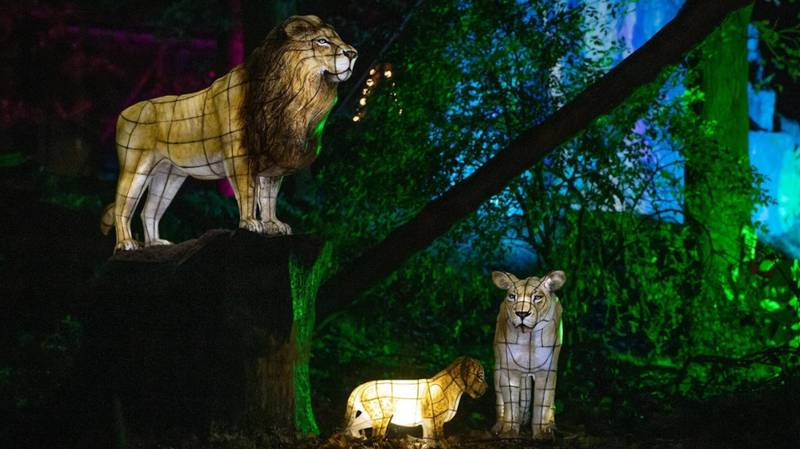 Chester Zoo's Lantern Festival Is Returning This Year