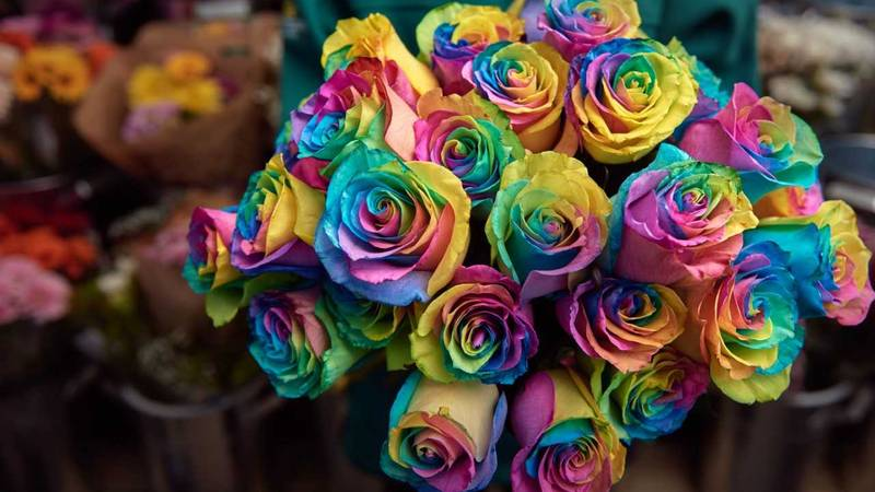 Morrisons Is Selling Multicoloured Rainbow Roses For Valentine's Day
